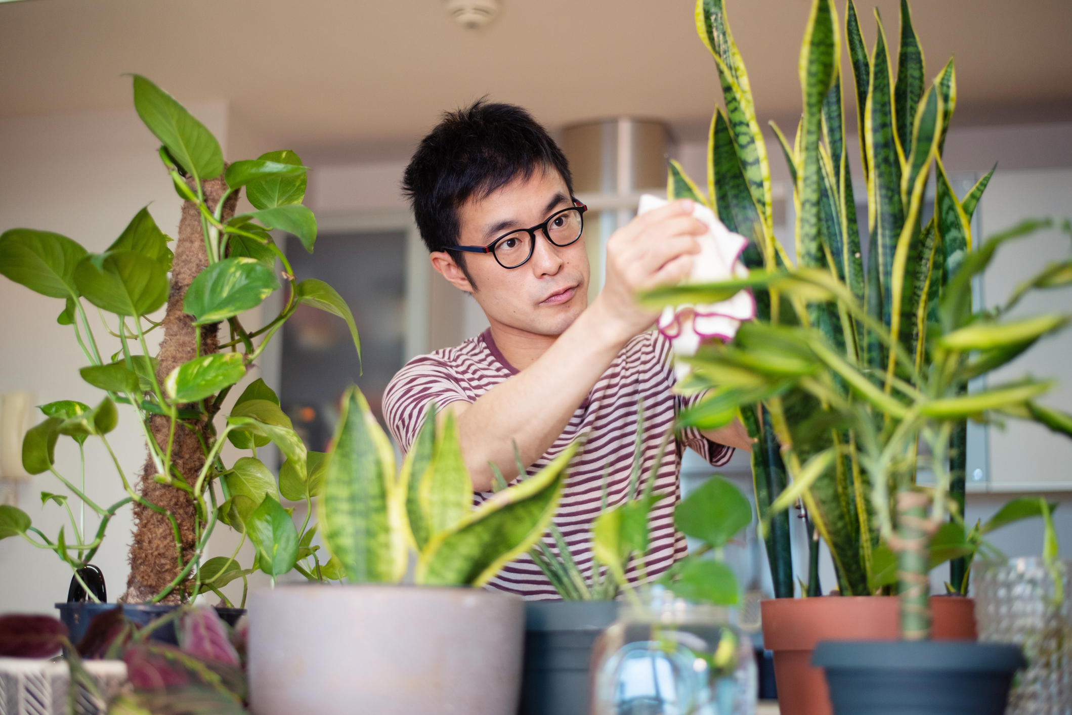 man caring for low maintenance indoor plants
