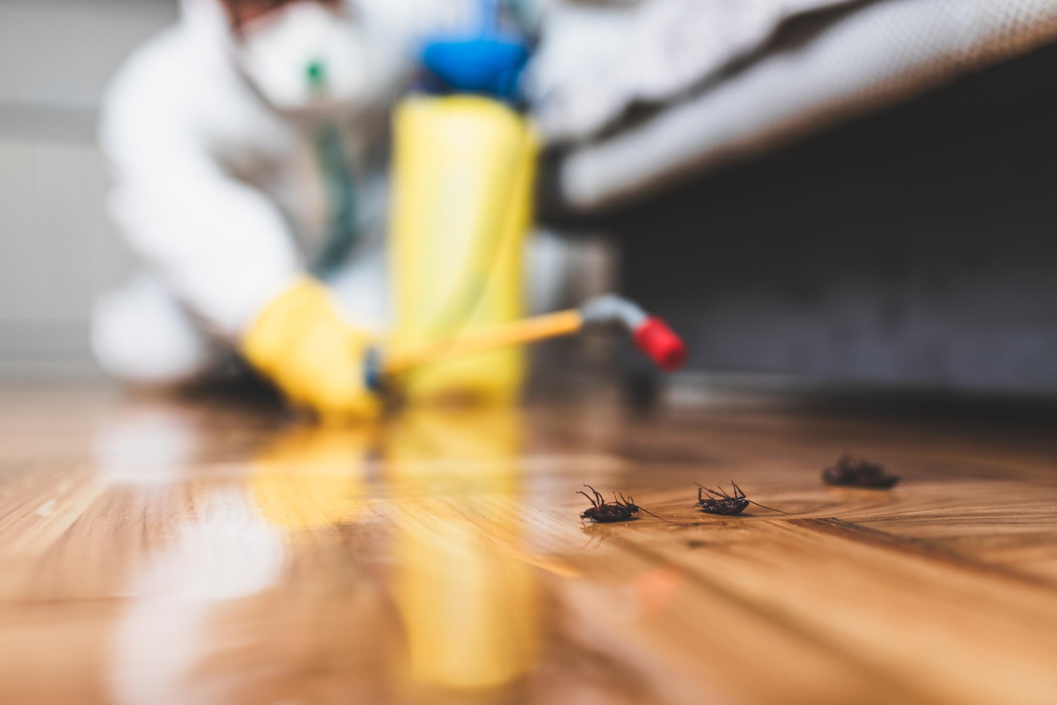 apartment bugs
