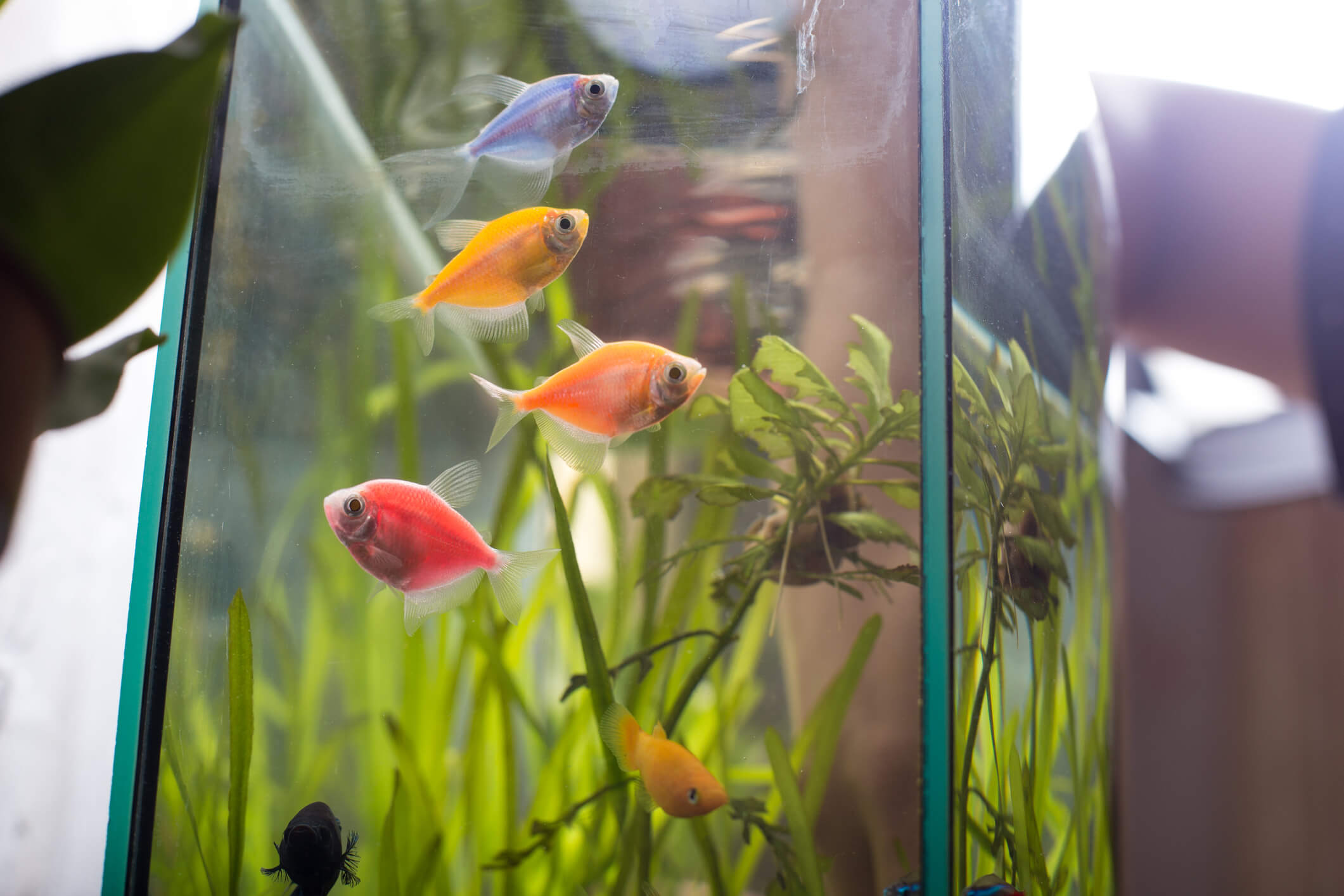 colorful fish in a tank